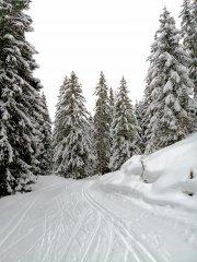 Winterloipe.jpg
